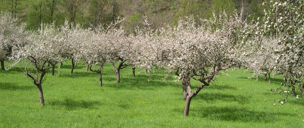 printempsvergerbien.jpg